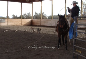 Work with my catch rope. You do not need to be a roper to do this.